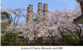 NRF- Sakura x02.JPG