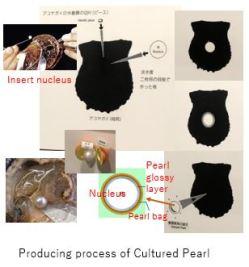 Mikimoto M- Culture x01