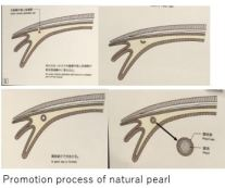 Mikimoto M- Natural x01.JPG