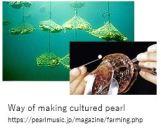 Mikimoto-H Pearl make x14