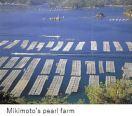 Mikimoto-H Pearl make x24.JPG