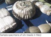 Tuat M- Silk x1